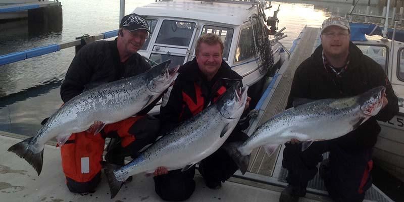 Tre fina Laxar tagna samma dag. Från vänster: Peter med Lax 15,3 kg mitten Tomas (Tummen) lax 16,3 kg höger Håkan lax 14,4 kg