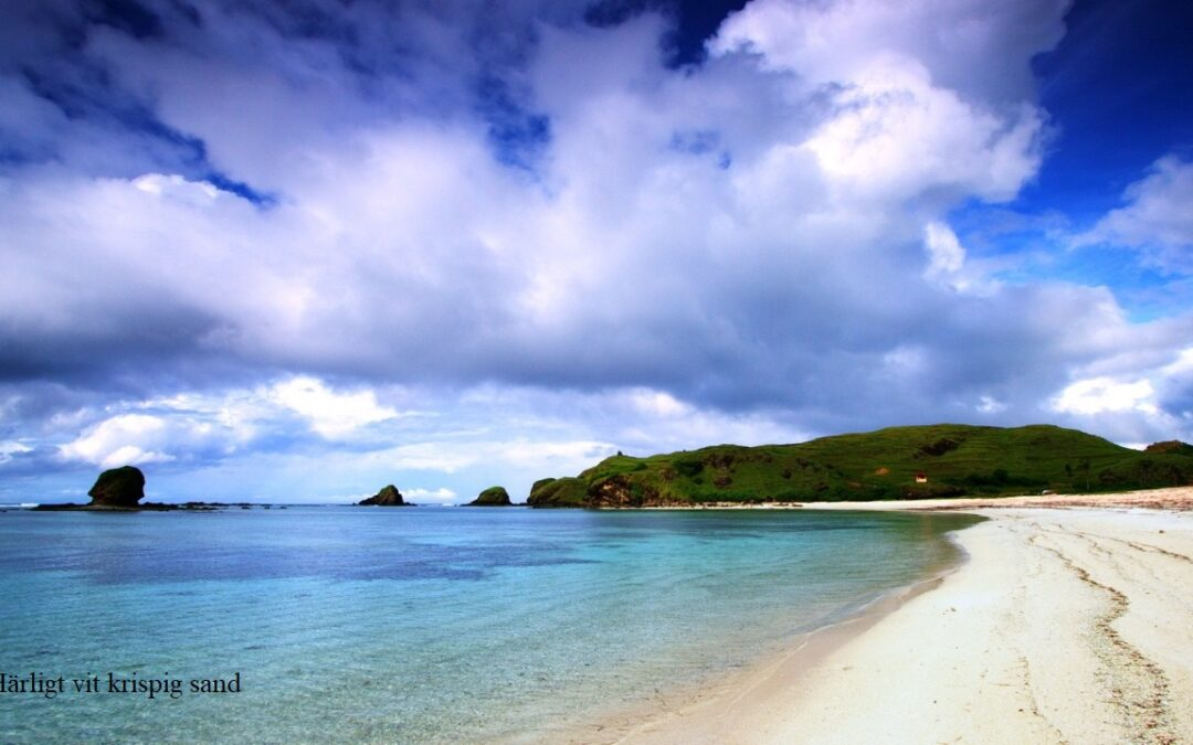 Hakuna matata i Cairns